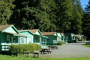 Cabins in the Redwoods